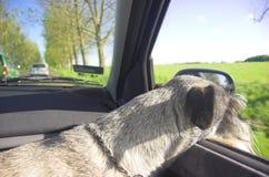 Hund im Autofenster Stockfoto