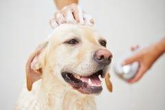 Hund im Badezimmer Stockfotos