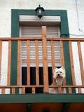 Hund im Balkon Stockbild