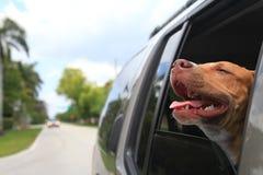 Hund im Fenster Lizenzfreie Stockfotos