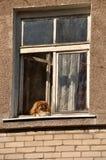 Hund im Fenster lizenzfreie stockbilder