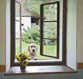 Hund im Fenster Lizenzfreies Stockbild