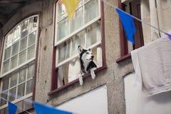 Hund im Fenster stockbild