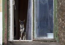 Hund im Fenster Stockfotos