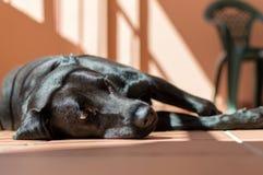Hund im Festzelt lizenzfreie stockbilder