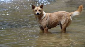 Hund im flachen Pool stock video