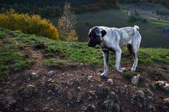 Hund im Freien Lizenzfreie Stockfotografie