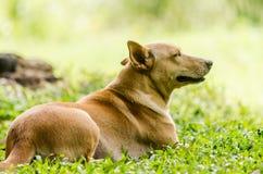 Hund im Garten Stockfotografie