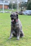 Hund im Garten Stockbilder