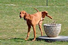 Hund im Garten Lizenzfreies Stockbild
