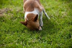 Hund im Gras lizenzfreie stockfotografie