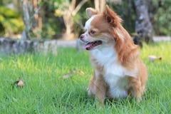 Hund im Gras Lizenzfreie Stockfotos