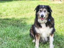 Hund im Gras Lizenzfreies Stockfoto