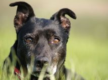 Hund im Gras Stockbild