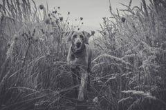 Hund im Gras Stockfoto