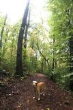 Hund im Holz Lizenzfreie Stockbilder