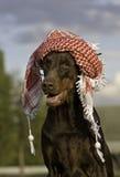 Hund im Hut Stockfotos