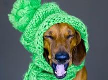 Hund im Hut Stockfoto