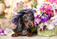 Hund im Hut und in den Blumen Lizenzfreie Stockbilder
