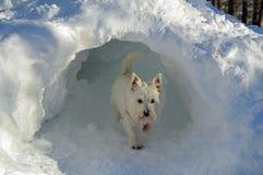 Hund im Iglu Stockfotografie