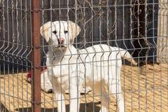 Hund im Käfig Stockfoto