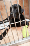Hund im Käfig, der von Fuß-Verletzung sich erholt Lizenzfreie Stockfotos