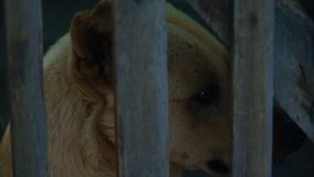 Hund im K?fig stock video footage