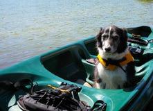 Hund im Kanu, das eine Schwimmweste trägt Lizenzfreies Stockbild