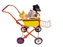 Hund im Kinderwagen Lizenzfreie Stockfotografie