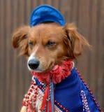 Hund im Kostüm Stockfoto
