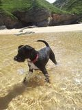 Hund im Meer lizenzfreies stockfoto