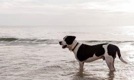 Hund im Meer am bewölkten Himmeltag Stockfotos
