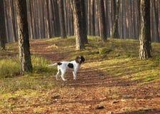 Hund im Park Stockfoto