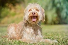 Hund im Park Stockbilder