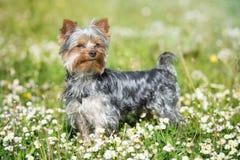 Hund im Park Stockfotografie