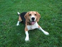 Hund im Park stockfotos