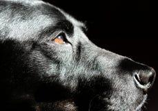 Hund im Profil Stockfoto