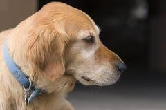 Hund im Profil Lizenzfreies Stockfoto
