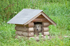 Hund im Rahmen Stockbild