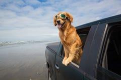Hund im Rücksitz Stockfotografie