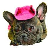 Hund im rosafarbenen Cowboyhut Stockfotografie