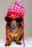 Hund im roten Hut und in den Gläsern Lizenzfreies Stockfoto
