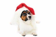 Hund im roten Weihnachtshut Lizenzfreie Stockbilder