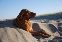 Hund im Sand stockbilder