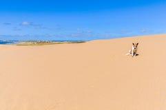 Hund im Sand in Cabo Polonio, Uruguay Stockbild