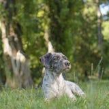 Hund im Schatten Etwas weckte seine Neugier Selektiver Fokus Lizenzfreies Stockfoto