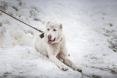 Hund im Schnee Stockfotos