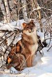 Hund im Schnee lizenzfreie stockbilder