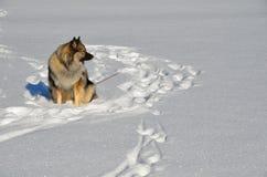 Hund im Schnee Lizenzfreies Stockbild