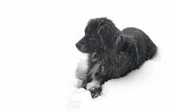 Hund im Schnee, der nach links schaut Stockbild